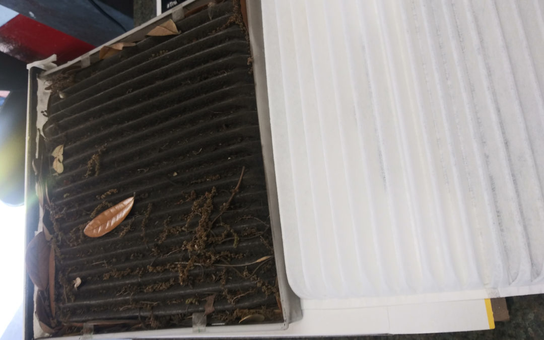 Cabin Air Filters: When & Why To Change Them